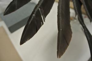Feather after
